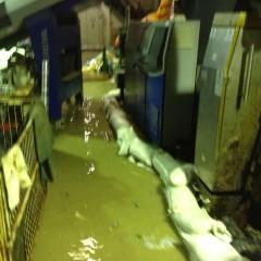 Hochwasser 2013 (2)