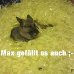 01 pp-gelb-max